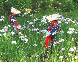 かすりの着物に赤いたすき、編み笠の出で立ちで花がらを摘み取る花摘み娘(6月4日撮影)