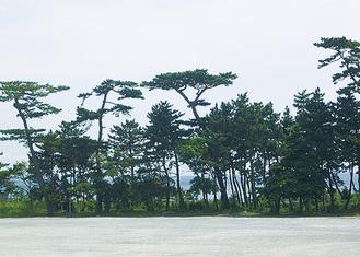 山縣が愛した白砂青松の風景