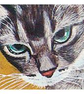 個性豊かな猫が集合