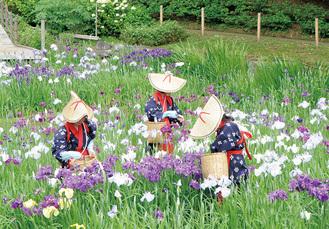 花がらを摘み取る花摘み娘  =6月1日撮影