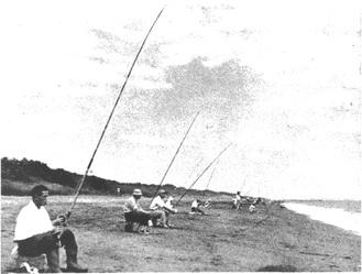 昭和20年代〜30年代初頭の大磯白キス投釣大会(大磯町郷土資料館提供)