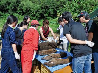 イノシシの食肉処理の工程を学ぶ参加者