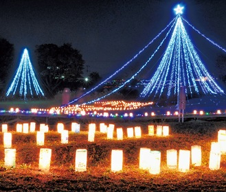 厳島湿生公園に灯されたランタンとイルミネーション