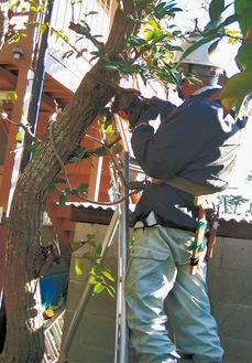 オプションで庭木の剪定なども依頼できる