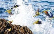 海水求め飛来