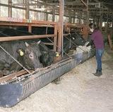 大磯なごみ牧場の畜舎
