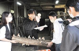 原木しいたけ狩りの様子を配信する中川ゼミの学生たち