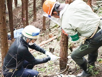 植え付け間伐などの作業を行う