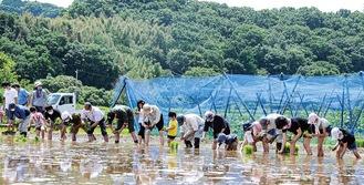 田植えをする農作物収穫体験の参加者