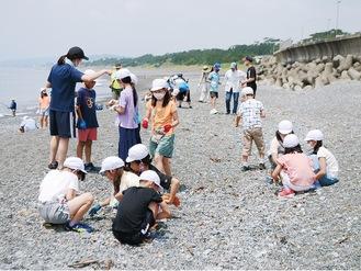 照ヶ崎海岸で砂利に紛れた小さなごみを拾う児童たち