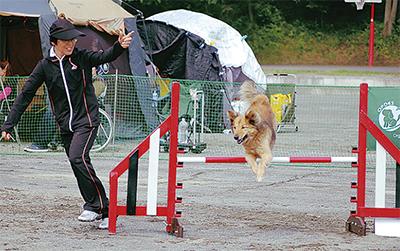 犬と人の一体感