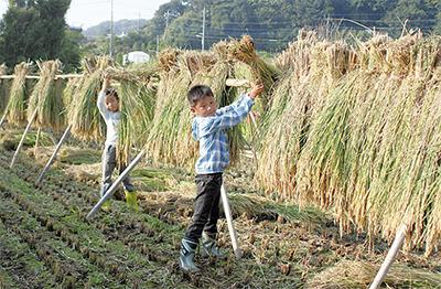 収穫の秋 お手伝い