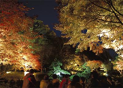 晩秋の夜空彩るもみじ