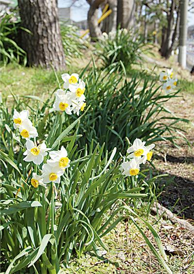 春のメッセンジャー