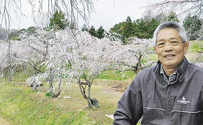 福島へエールの開花