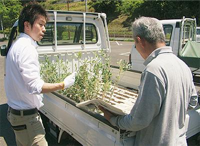 オリーブ苗木を農家に配布