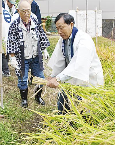 奉納米を収穫