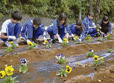 中学生らが花苗を植付
