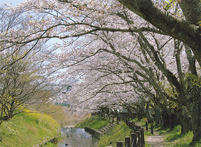 地元で楽しむ桜めぐり
