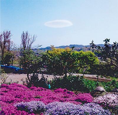 UFO雲が芝桜を見物