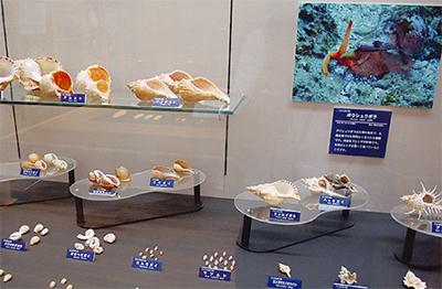 大磯の貝230種を紹介