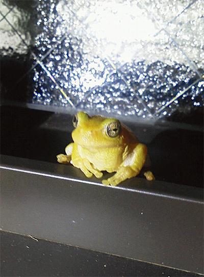 朝の窓に黄色い珍客