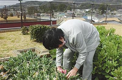 屋上菜園で「自給自足」