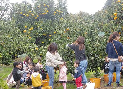 みかん収穫体験で交流
