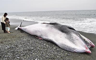 クジラの画像 p1_10