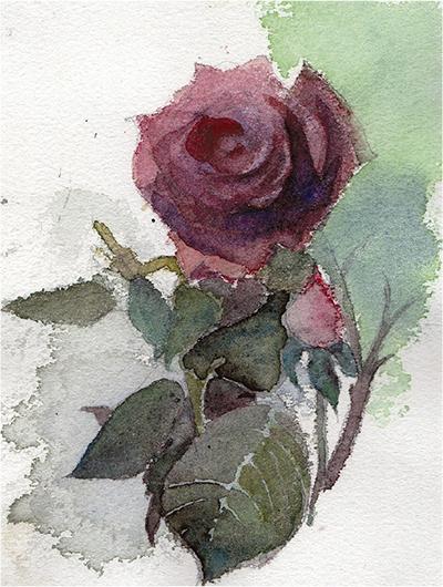 旧吉田茂邸のバラ描く