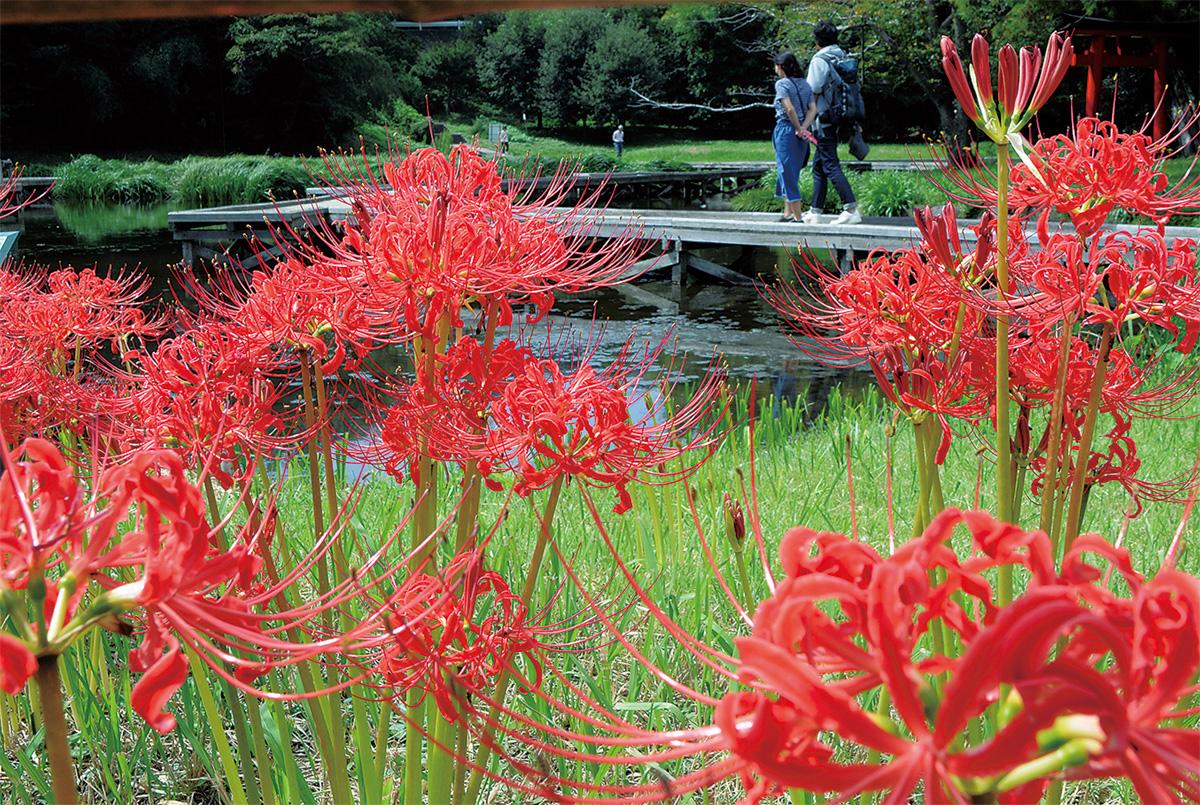 水辺彩る赤いぼんぼり