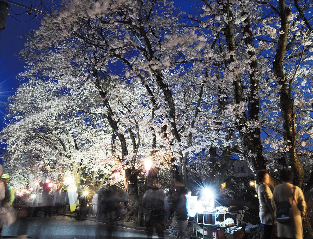 平成最後の満開夜桜