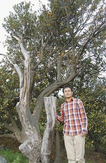 みかんの木の保存を目指す秋澤史隆さん