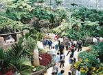 熱帯植物が咲くトロピカルドーム
