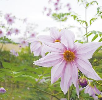 50本の花々が咲き誇っている