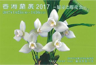 2016年度神奈川県知事賞を受賞した紙谷多佳子さんの作品