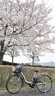 「ぐるりん号」を満開の桜がお出迎え=諏訪の原公園