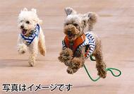 愛犬と初夏を楽しむ
