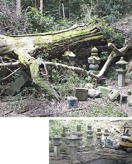 (上)巨木によって壊された墓所(下)修復された現在の様子(8月21日撮影)