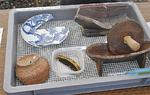 櫛や皿などの出土品