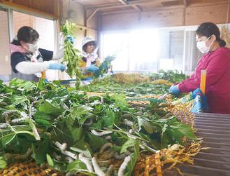室温25℃に保たれた蚕部屋は、桑の香りに包まれる