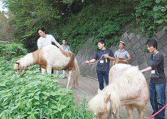 職業体験として馬の世話をする塾生