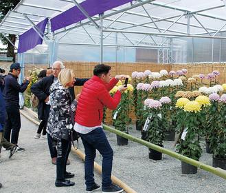 菊を写真に収める観光客 =3日