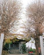 塩害で色づかぬ木々