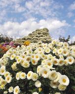 久野で花々が見頃
