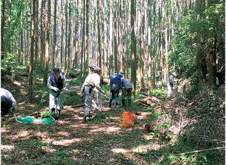 人工林にモミジの苗を植栽=協議会提供