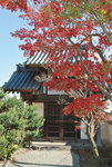 まもなく紅葉に包まれる慈眼寺。雰囲気を見に訪れてみては
