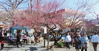 昨年開催された「小田原梅まつり」の様子
