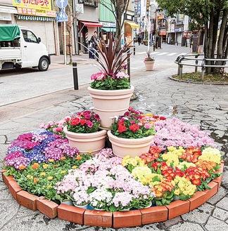 サークル花壇の様子(昨年)