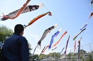 Carp streamers comfortably swim in the sky in Odawara